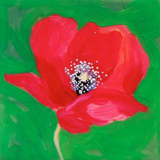 Hill&Stump - Red Poppy Mini