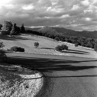 Zen Ranch