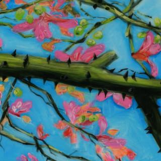Hill & Stump - Silk Floss Tree