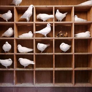 Jo Palasi - Pigeon-Holed