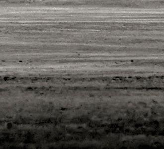 David Fokos - Cattle Detail
