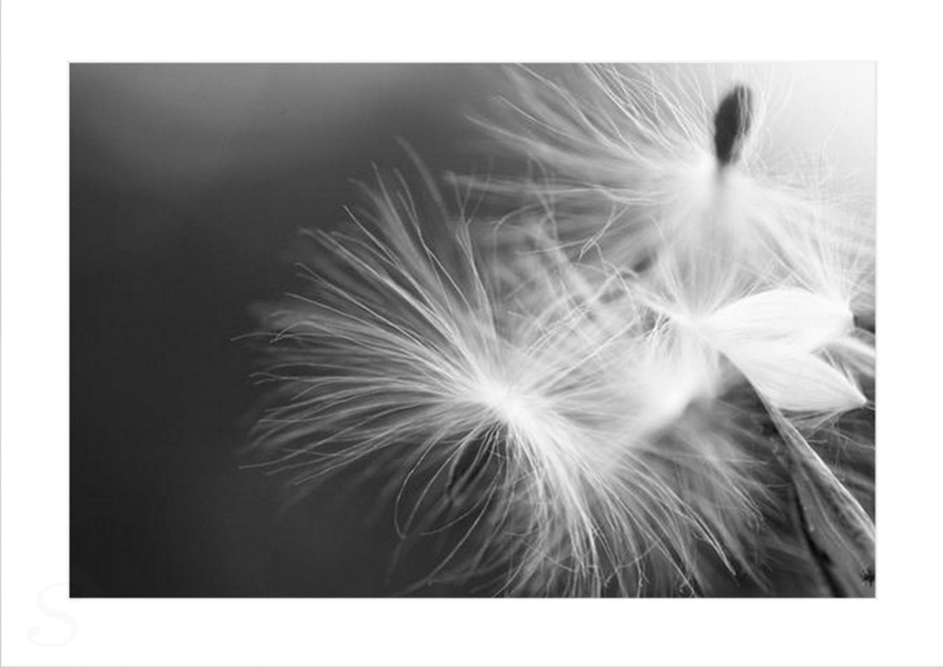 Jo Palasi - The Wind Riders