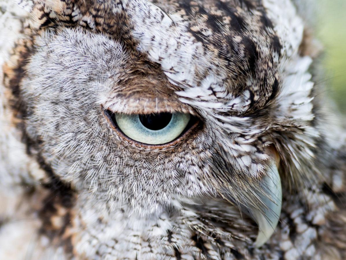 https://sparksgallery.com/wp-content/uploads/2016/10/Robby-Ticknor-Owl-e1475618779558.jpg