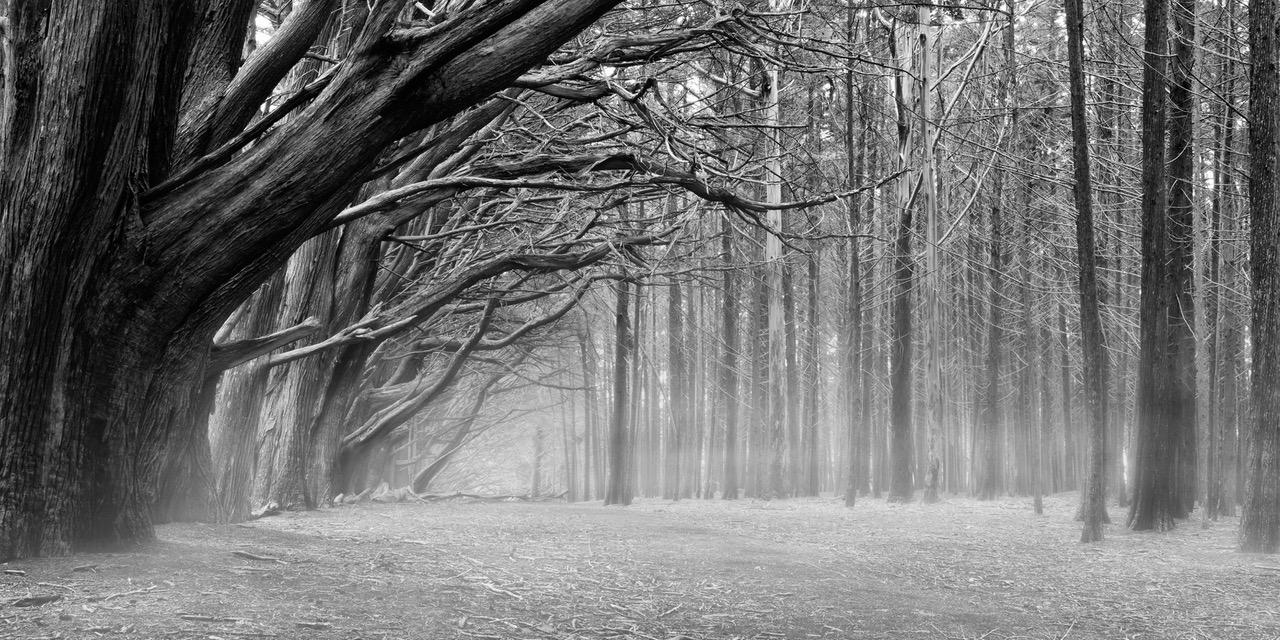 https://sparksgallery.com/wp-content/uploads/2018/10/Silent-Forest.jpeg